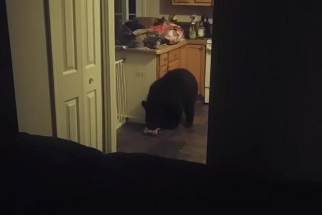A bear feasts on a bag of Hershey's Kisses in a North Carolina family's kitchen. Screenshot: Ben S/YouTube