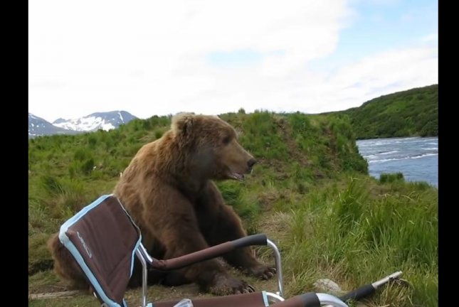 A bear sits next to a photographer's chair in Alaska to observe nature and ponder the meaning of existence. Screenshot: Storyful