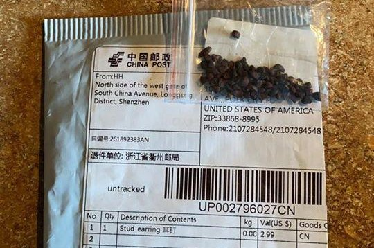 These unsolicited seeds were mailed from China to a Florida home. Photo courtesy of Gabriella Hielscher