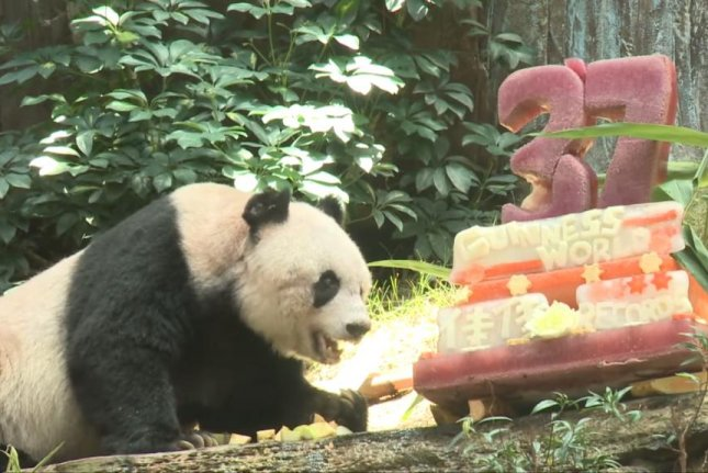 Jia Jia, a panda at Hong Kong's Ocean Park, celebrated her record-setting 37th birthday with a cake made from ice, grenadine, mint syrup and apple. BBC News/YouTube video screenshot
