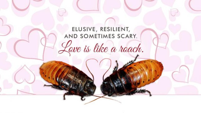 The Bronx Zoo is allowing Valentine's Day revelers to name roaches for their sweeties. Photo courtesy of the Bronx Zoo