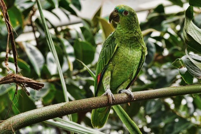 A British fire department said a man had to be rescued from a tree after failing to capture his escaped pet parrot. Photo by Schwoaze/Pixabay.com