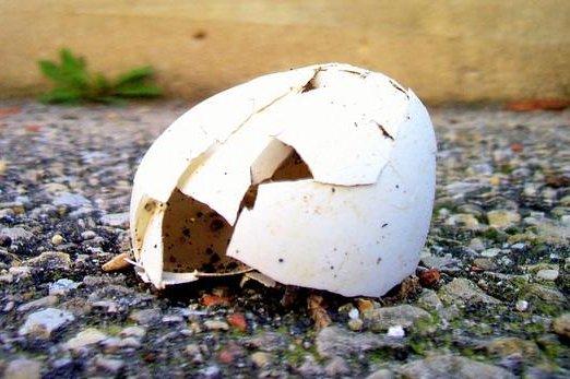 A broken egg shell (CC/Tom Ray)