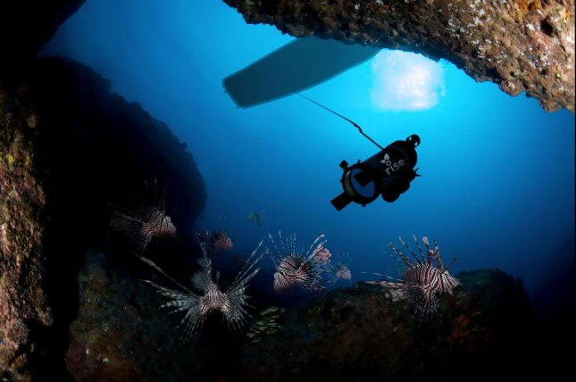 An illustration shows the lionfish-hunting robot honing in on the invasive species. Photo by RSE