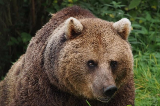 Bears shot and killed after escaping zoo enclosure, attacking boar