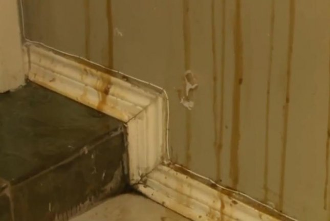 Watch Honey Streams Down Walls Of Bee Infested Texas Home