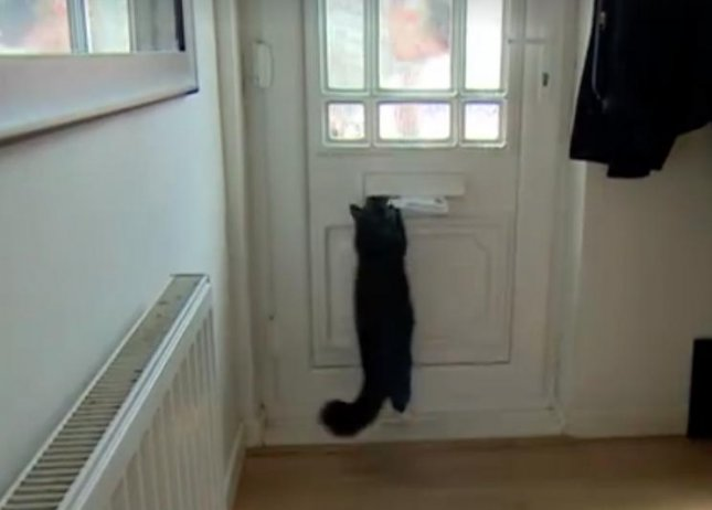 A U.K. cat has scared away the Royal Mail after reportedly attacking the postman's fingers on multiple occasions. Matthew Sampson of Bristol, England received a notice warning that his mail service would be halted if he did not restrain his cat Bella or provide an alternative method for delivering his mail. Sampson said he understood the postman's complaint, but refused to have the cat restrained.  Screen capture/BBC Points West/Facebook