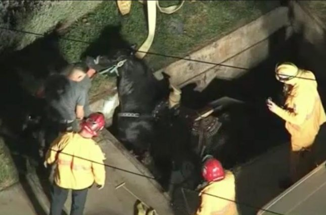 Rescue crew attended to a horse in California after it fell into an underground vault in Riverside. The horse managed to jump out of the hole and sustained minor injuries. Screen capture/NBC Los Angeles
