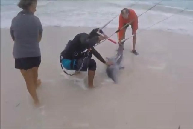 Kiteboarders come to the rescue of a dolphin stranded on a Mexican beach. Screenshot: Newsflare