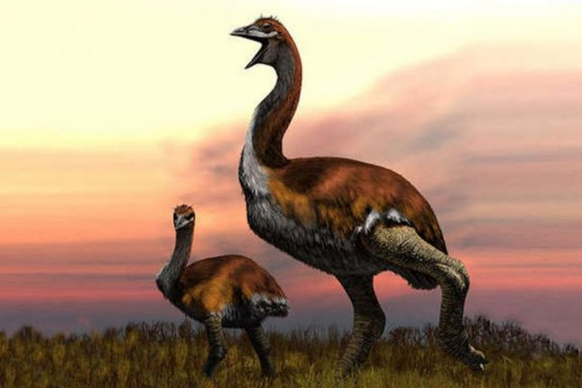 Vorombe titan confirmed as largest bird ever weighing up to 800kg