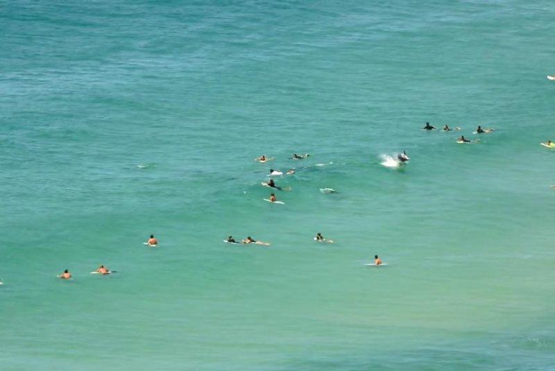 Dolphins swim among surfers at an Australian beach. Screenshot: Storyful