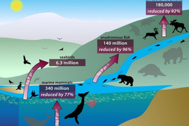 A chart reveals how the loss of wildlife diversity and the disappearance of large animals has led to a drastic reduction in the amount of recycled nutrients available on Earth. Photo by University of Vermont