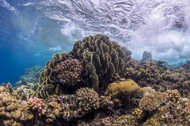 Researchers are searching for ways to protect coral from the stresses of global warming. Their DNA and the DNA of their microbial inhabitants could offer clues. Photo by Anna Roik