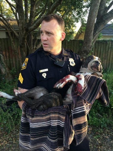 Police Sgt. R. Mills and the injured dog. Photo: Tampa Police Dept.