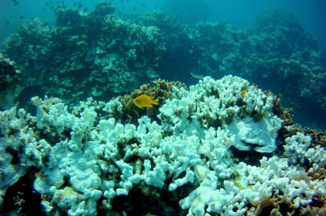 Coral bleaching events are becoming more common as a result of global warming. Photo by Petchrung Sukpong/Flickr