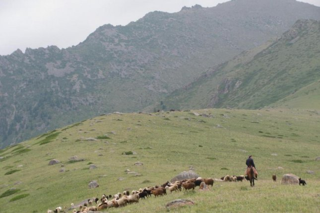 A herder on horseback leads a flock of sheep and goats through a field of grass in Kazakhstan's Dzhungar Mountains. Photo by Paula Dupuy/WUSTL