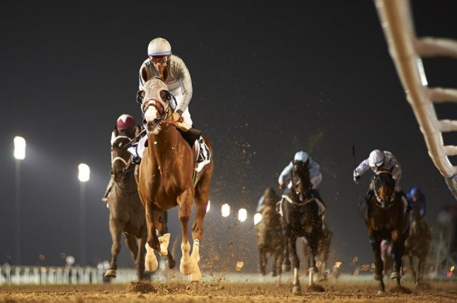 California Chrome was a star in Dubai two years ago. The Carnival races at Meydan start Jan. 12 -- who will star this time? (DRC Photo)
