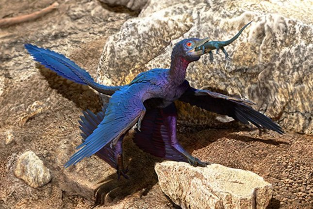 Scientists determined the microraptor ate the lizard whole and swallowed the reptile head first. Photo by Doyle Trankina/CAS