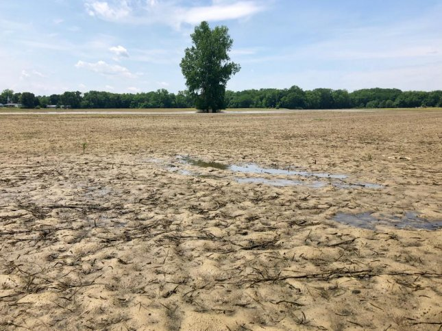 A corn field in Indiana remains unplanted in mid-June because abnormally intense rain has kept the field too wet for farmers to drive their tractors on. Photo by Jessie Higgins/UPI