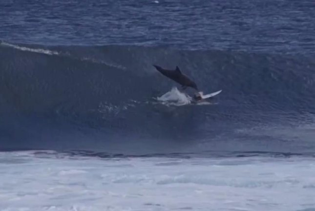 A dolphin jumps out of the water and lands on surfing champ Jed Gradisen, 13, in Australian waters. Screenshot: STAB/Vimeo