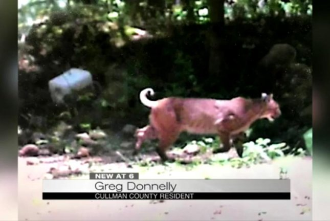 An Alabama man is trying to identify the big cat photographed by his game camera. Screenshot: WIAT-TV
