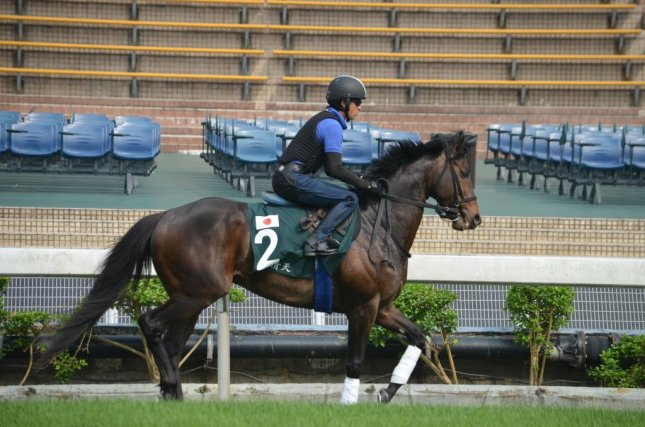 Japanese runner Lovely Day warms up at Sha Tin in Hong Kong for the Group 1 Audemars Piguet Cup scheduled for Monday. Photo by Richard Gross/UPI
