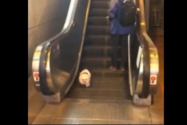 A puppy confused about how escalators work. Screenshot: Newsflare