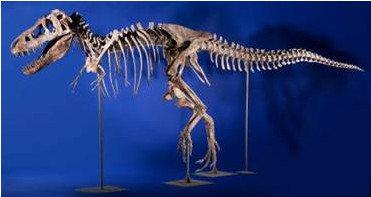 Dinosaur skeleton in New York auction