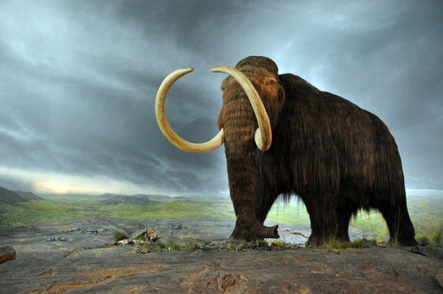 Reconstruction of a woolly mammoth in a Canadian museum. Credit: Flying Puffin, Wikipedia, Creative Commons