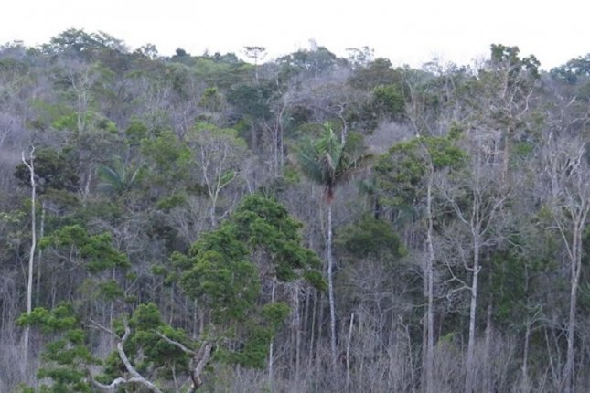 The Amazon isn't changing as fast as the climate. Photo by University of Leeds