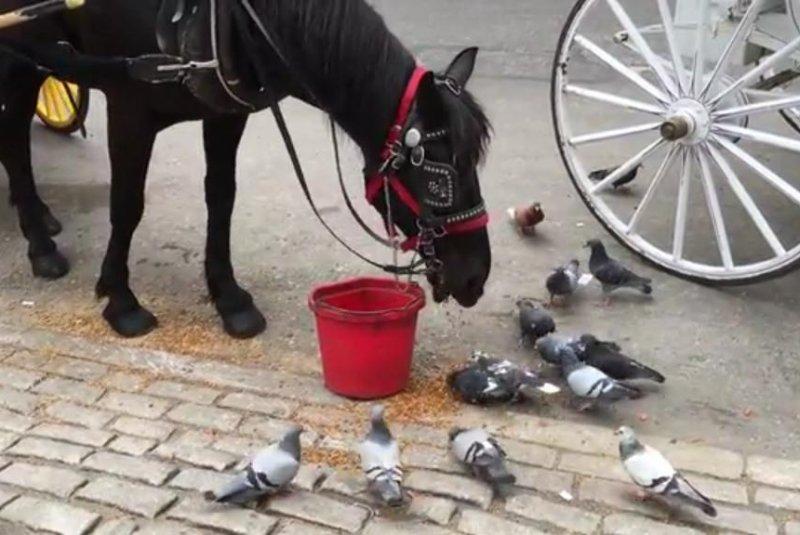 A horse feeds the birds in New York. Screenshot: Storyful