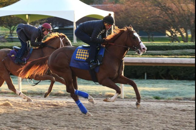 Improbable tests the Oaklawn Park track in preparation for Saturday's Grade I Arkansas Derby and a hoped-for spot in the Kentucky Derby. Photo Courtesy Oaklawn Park