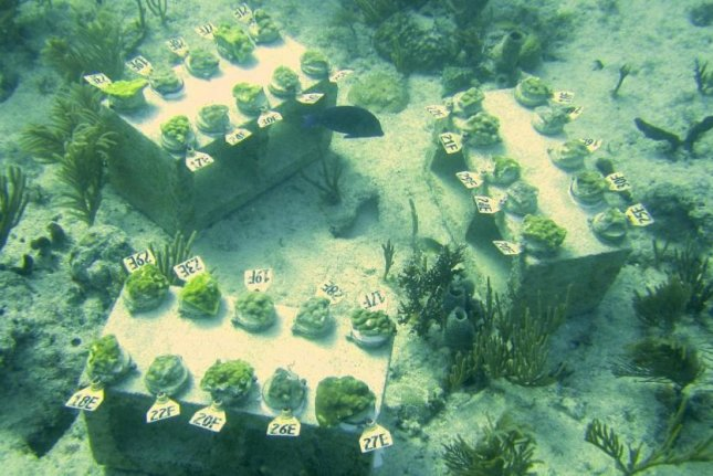 Coral study reveals the genomics of local adaptation