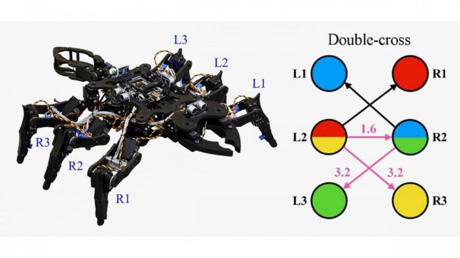Researchers used the physics of chaos, a unique combination of nonlinear equations, to yield insect-like gait patterns in a six-legged robot. Photo by Ludovico Minati