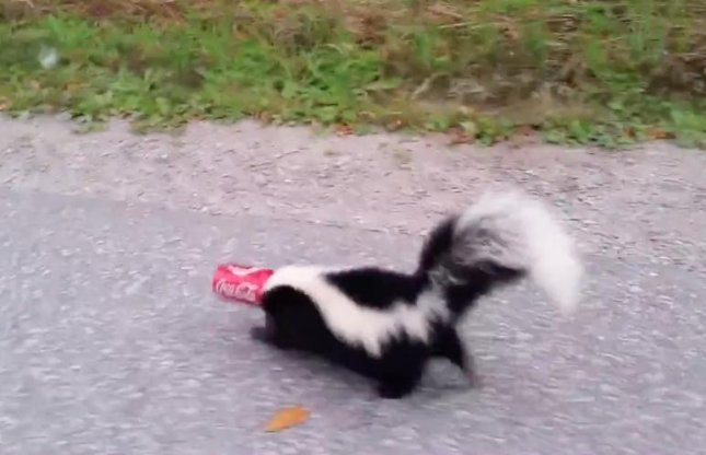 A Canadian man bravely helped rescue a skunk whose head had gotten stuck in a can of soda. The man calmly begged the skunk not to spray him as he slowly approached and eventually removed the can.  Screen capture/SkeptiSketch/YouTube