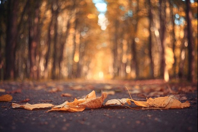 October 2015 was the warmest October on record, new data shows. October's temperatures are trending with the rest of 2015 to likely make it the warmest year on record. Photo by Kichigin/Shutterstock.