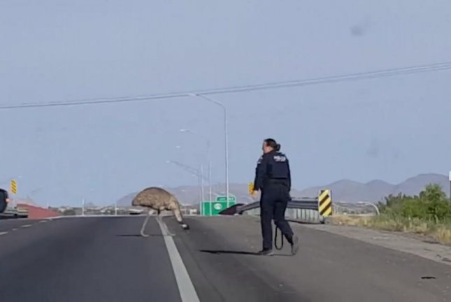 Stray emu lassoed on highway by New Mexico authorities