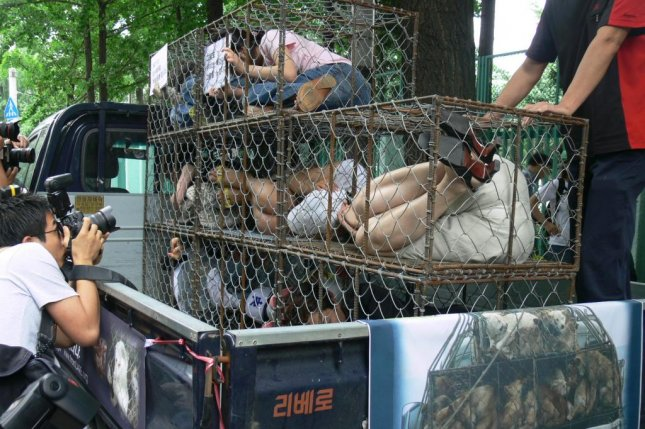 Animal rights activists affiliated with South Korean nonprofit Korean Animal Welfare Association launched a public awareness campaign in 2014 to protest the conditions in which dogs for consumption are raised. The activists have said in statement the dogs are crammed in uncomfortable cages in order to save on transportation costs. Photo courtesy of Korean Animal Welfare Association