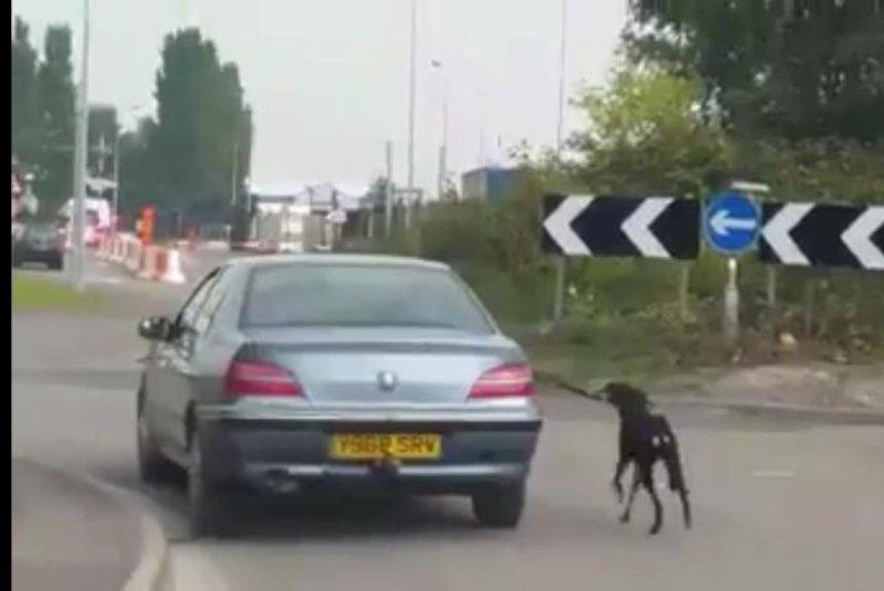 Welsh police seek 'hazardous' dog-walking motorist