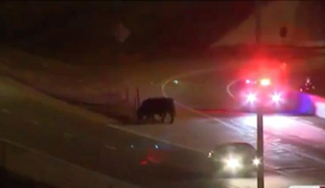 A dozen cattle were set loose on a Nebraska highway after a truck carrying 31 cows and bulls overturned. Eight of the cattle were secured when a second trailer arrived and four were shot for safety reasons after being involved in two additional crashes.  Screen capture/KMTV/Inform Inc.