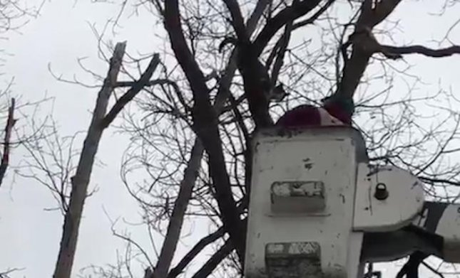 Cat Stuck in Tree for Three Days