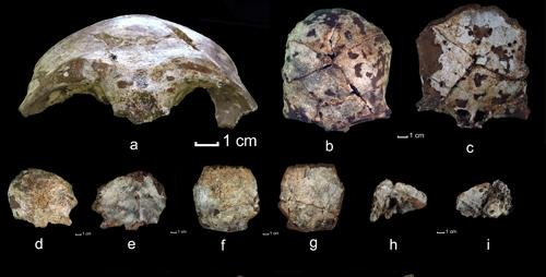 The researchers found skull fragments that date to 63,000 years ago. Credit: F. Demeter/University of Illinois
