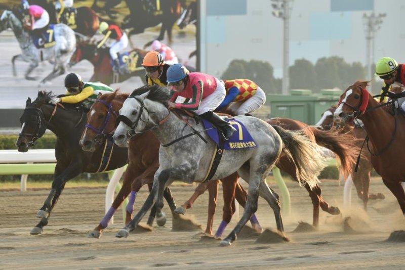 Omega Perfume (gray) wins the Grade 1 Tokyo Daishoten for the third straight year at Oi Racecourse in Japan. Photo courtesy of Katsumi Saito