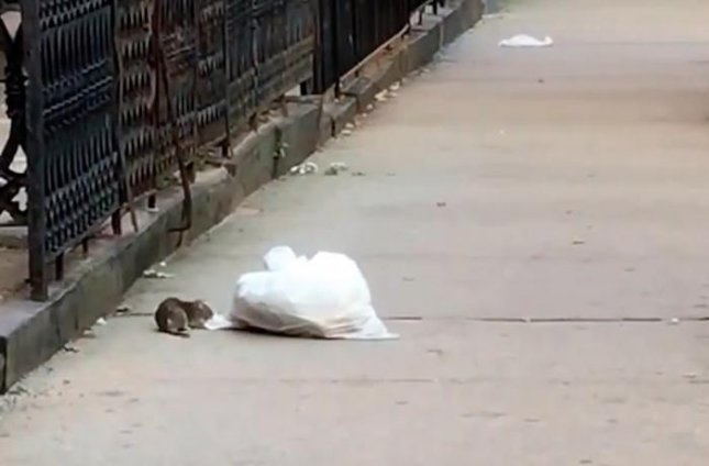 Video captures rat trying to flee with entire garbage bag