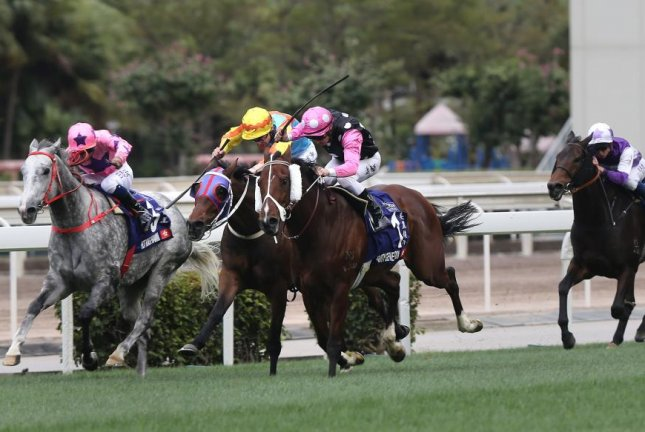 Beauty Generation (pink, white and black dots), shown winning the Queen's Silver Jubilee Cup in his last outing, is among the favorites for Sunday's Chairman's Trophy at Sha Tin Racecourse in Hong Kong. Photo courtesy Hong Kong Jockey Club