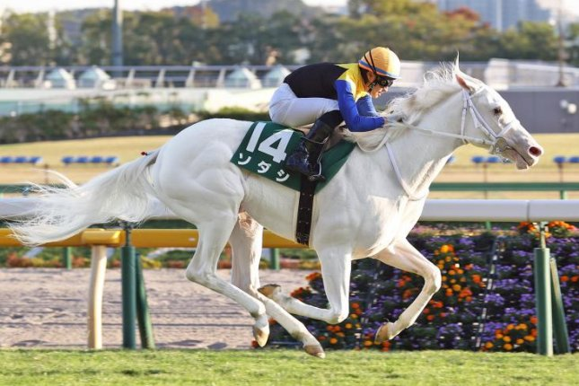 Sodashi, a rare white Thoroughbred shown winning the Artemis Stakes earlier in the season, is among the favorites for Sunday's Grade 1 Hanshin Juvenile Fillies. Photo courtesy of Japan Racing Association