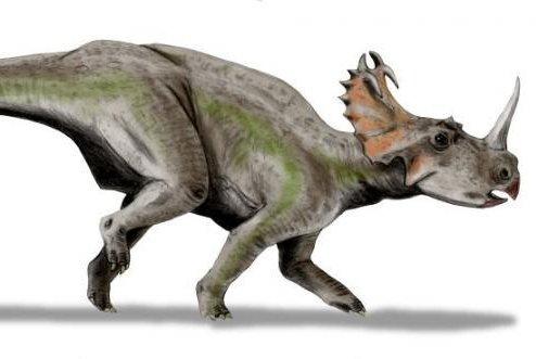 Centrosaurus, the Triceratops relative whose bones contained modern microbes. Photo courtesy ofNobu Tamura