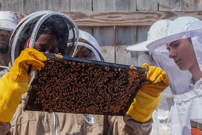 Beekeeping collectives in Detroit and West Virginia coal country are providing economic opportunity and helping the environment. Photo courtesy of Detroit Hives