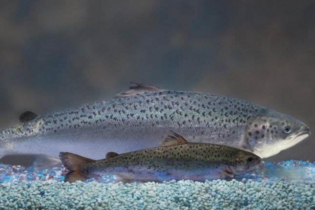 FDA okays GM salmon for sale in the United States
