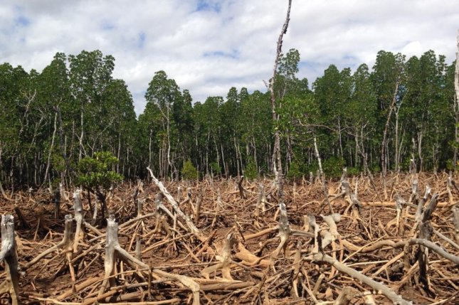 New research lists curbing deforestation as the top priority for making the planet's land sector carbon neutral by 2040. Photo by Cunningchrisw/Wikimedia Commons